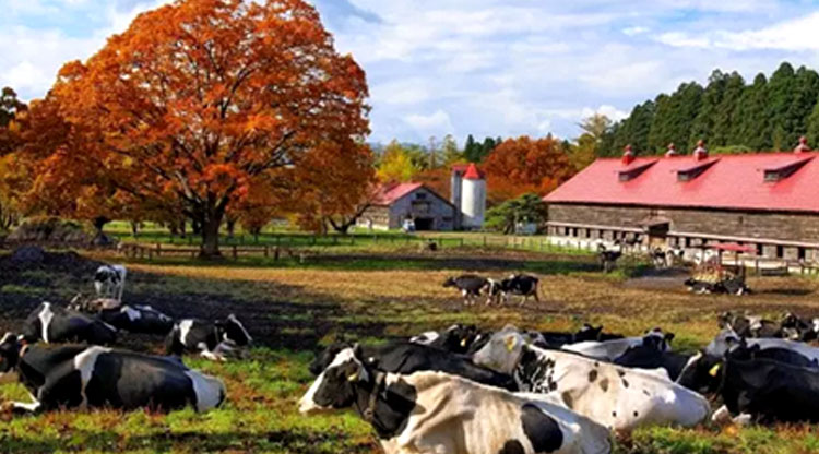 现代农业园规划,现代农业庄园规划,现代农业园区规划