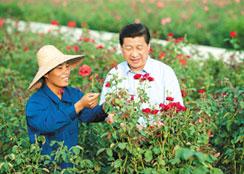 休闲农业 · 海南省三亚市亚龙湾国际玫瑰谷:既是精品农庄,也是获总书记赞赏的玫瑰天堂