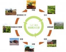 生态农业是什么?生态农业有哪几种经营模式?