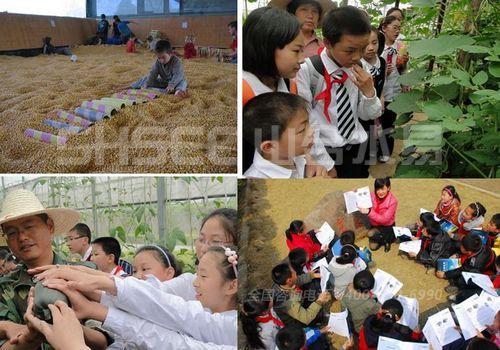 孩子们在亲子农园的学习氛围非常融洽