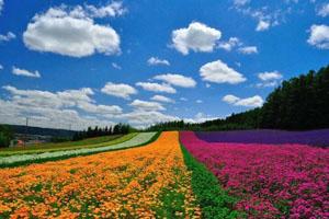 香约日本休闲农业鲜花之旅