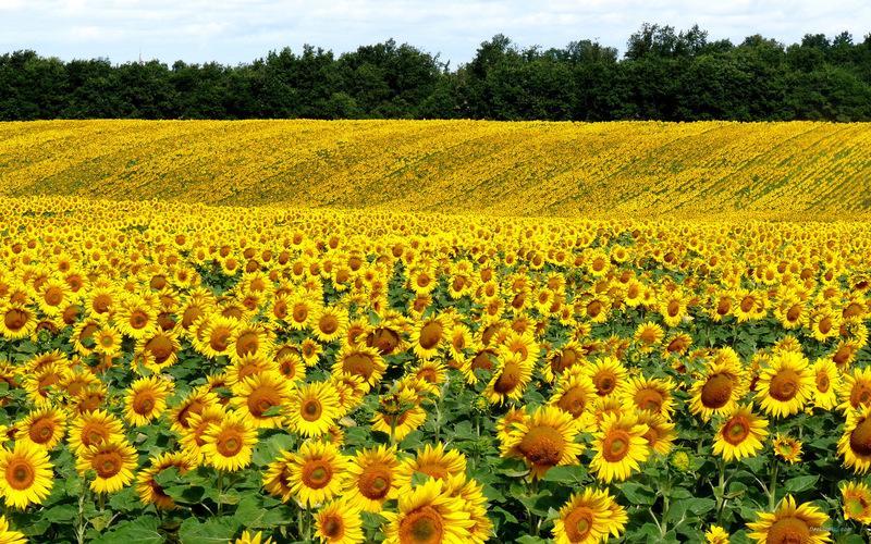 亲子农业规划,亲子农园规划,亲子农业规划设计
