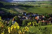 葡萄酒企业开展酒庄caopron|手机官网的7大好处,你还犹豫什么?