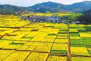 叶敬忠:乡村振兴不是乡村过度产业化