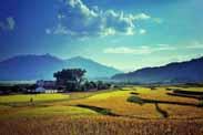田园养生开发过程中应注意的问题