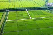 农业农村部等6部门发布土地经营权入股试点工作指导意见