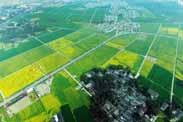 田园综合体如何走出准、稳、顺道路?