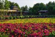 休闲农业发展新模式:托管将成为休闲农业和乡村caopron|手机官网新引擎