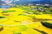 农业农村部等七部门联合印发《国家质量兴农战略规划(2018—2022年)》